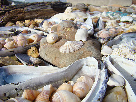 Baslee Troutman - Ocean Sea Shells art prints Seashells