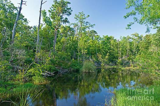 Ocean Springs marsh by Russell Christie