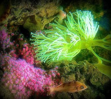 Rosemarie E Seppala - Ocean View Of Sea Corals