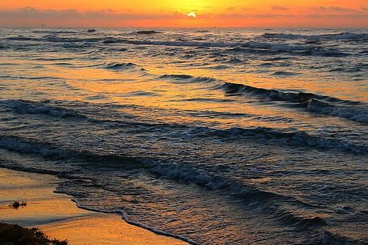 Beach Wave Sunrise by Candice Trimble