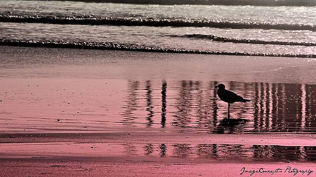 Oceans Pink by Emily Fidler
