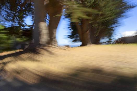 Daniel Furon - Oceanside Trees