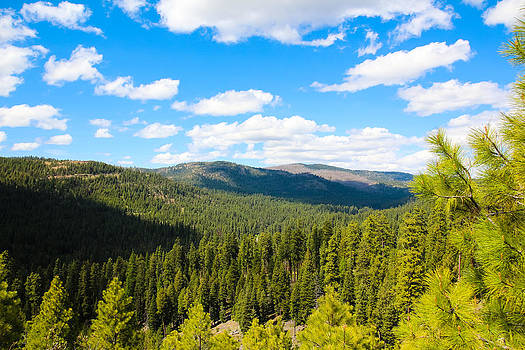 Ochoco National Forest by Christy Patino
