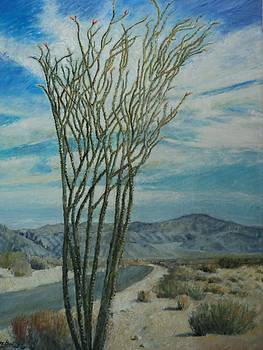Sandra Lytch - Ocotillo in JTNP