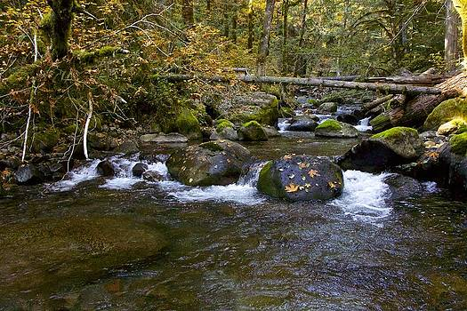 October Creek by Tim Rice