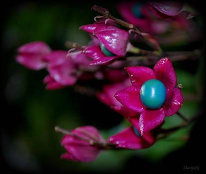 October in my garden... by Marija Djedovic