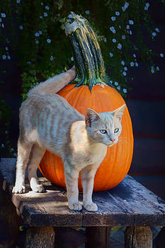 Nikolyn McDonald - October Kitten #1