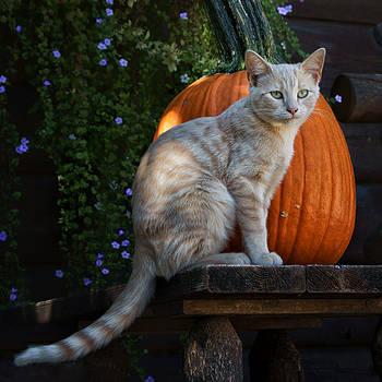 Nikolyn McDonald - October Kitten #4