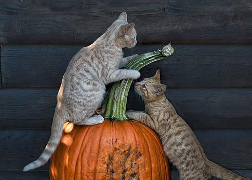 Nikolyn McDonald - October Kittens