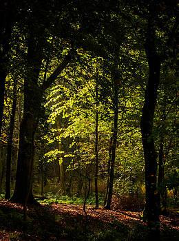 October Light by Odd Jeppesen