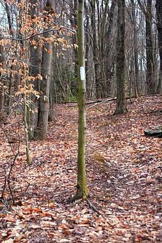 October Mountain Appalachian Trail by Spirit Baker