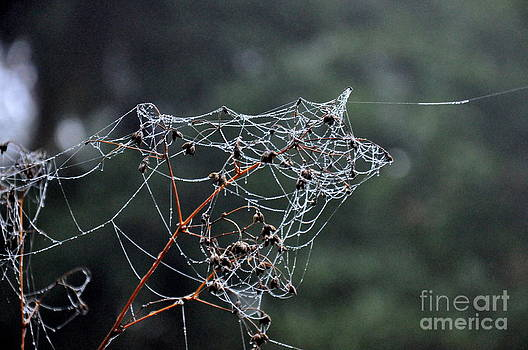 October Spiderwebs in the Garden by Tanya  Searcy