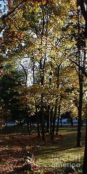October Sunshine by Cindy Bettinger