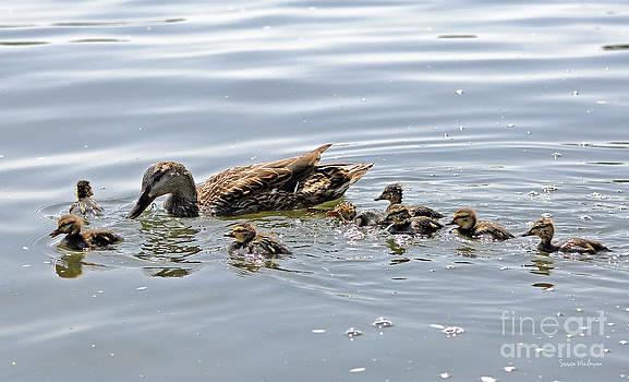 Susan Wiedmann - Octomom Duck With Her Ducklings