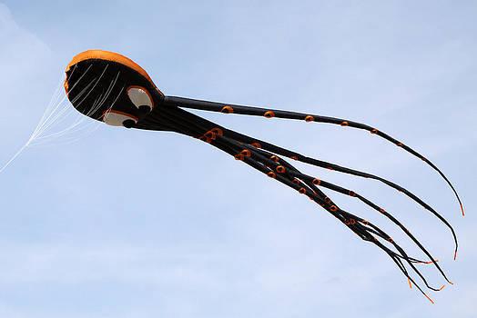 Octopus Kite by John Rockwood