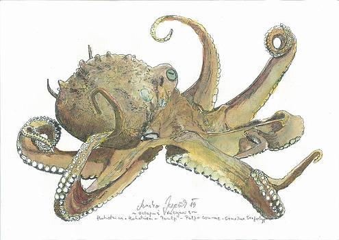 Marko Jezernik - Octopus Vulgaris