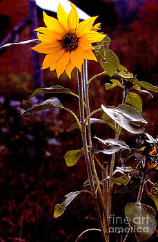 Ode to Sunflowers by Patricia Keller