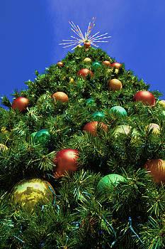 Oh Christmas Tree by Kathy Churchman