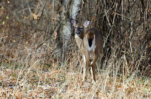 Oh Deer by Cheryl Cencich