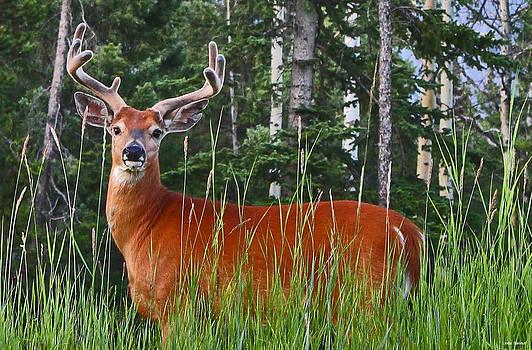 Linda Sannuti - Oh Deer
