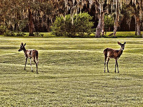 Oh Deer by Oscar Alvarez Jr
