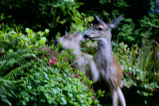 Oh DEER what can the matter be? by Kym Backland