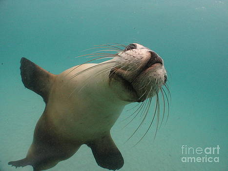 Oh Hey Sea Lion by Crystal Beckmann