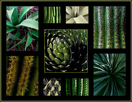 Marlene Burns - oh my cacti