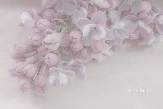 Sandra Foster - Oh So Gentle - Lilac Sprig Macro