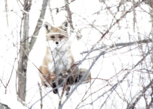 Oh They Can't See Me by Deborah Johnson