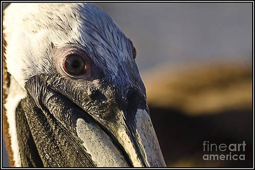 Agus Aldalur - ojo de peilcano