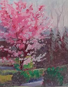Okame Cherry Tree by Judy Fisher Walton