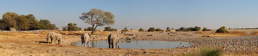 Okaukeujo waterhole panorama 1 by Grobler Du Preez