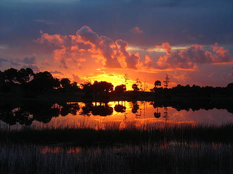 Okeeheelee Sunrise by Karen Lindquist