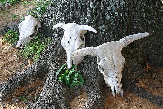 Nina Fosdick - Oklahoma Cow Skulls