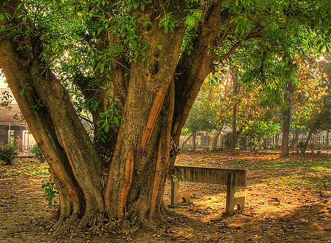 Old and Alone by Farhan Raza Naqvi