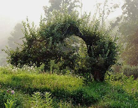 Old Apple Tree by Carl Sheffer