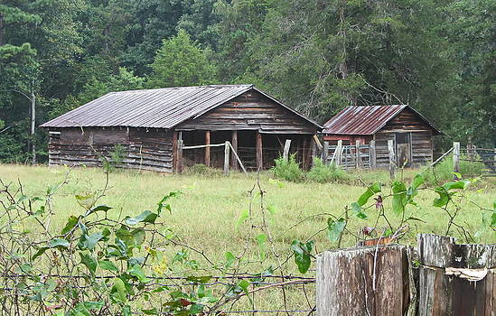 Cathy Lindsey - Old Barn and Shack