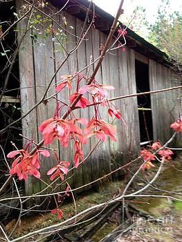 Old Barn by Cindy Hudson