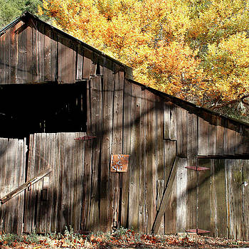Art Block Collections - Old Barn in Autumn