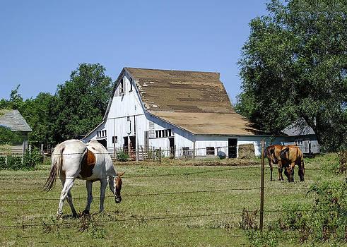 Terry Shoemaker - Old barn in Kansas