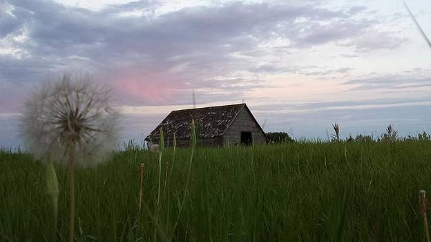 Old barn with pinkish sky by Anne Peters