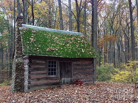 Old Cabin in Woods by Iris Posner