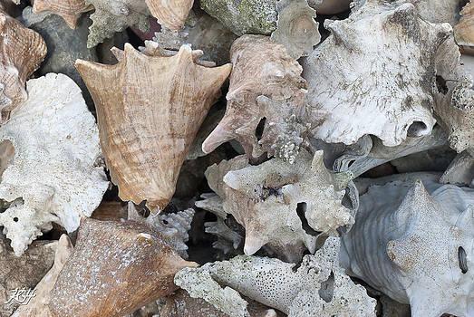 Old Conch Shells by Kenneth Hadlock
