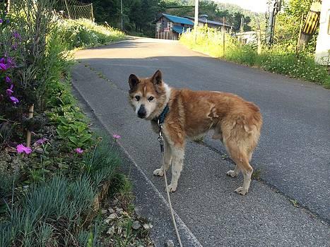 Old dog by Yoshikazu Yamaguchi