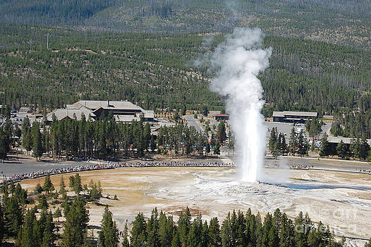 Old Faithful from Observation point by Susan Montgomery