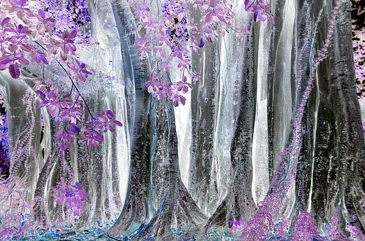 Old Florida Oak Tree by Diana Berkofsky