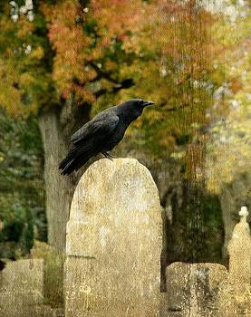 Gothicrow Images - Old Graveyard And Crow