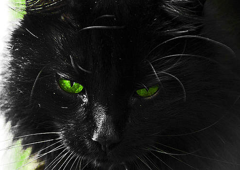 Old Green Eyes by Paul Howarth