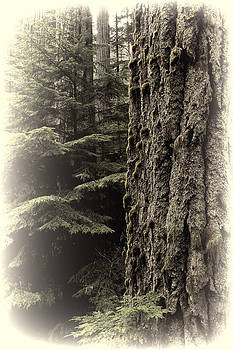 Randy Hall - Old Growth Forest